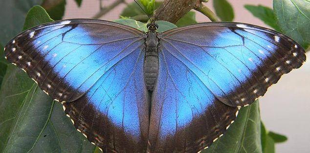 PAPILLONERIE : FERME GUYON 1001 PATRICK-FARRAR, CHAMBLY QC CANADA J3L 4A7 .Découvrez un lieu d'apprentissage et de découvertes pour tous avec une Papillonnerie et une Ferme pédagogique.