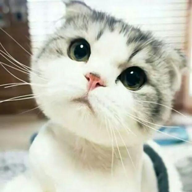 こりゃあ可愛い!♪