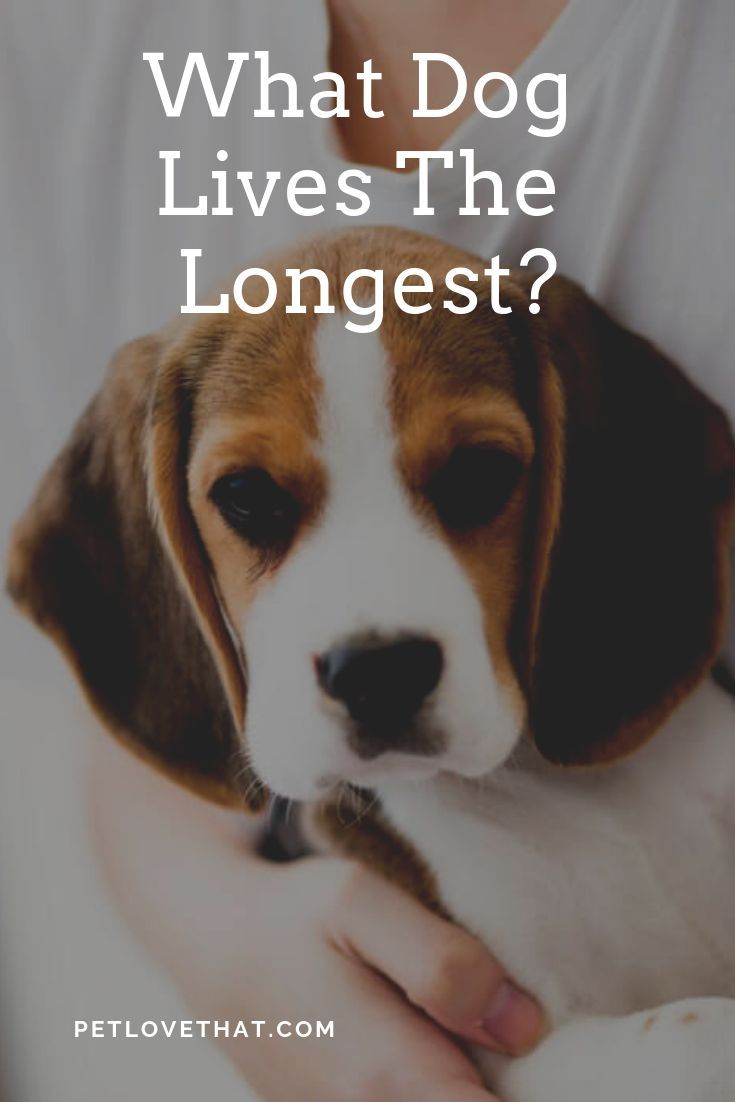 How Long Can Dogs Actually Live For A Dog S Life Expectancy