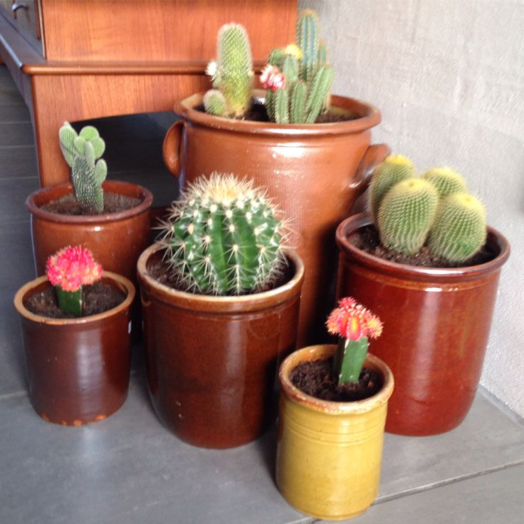 Pickle Jars as flower pot covers