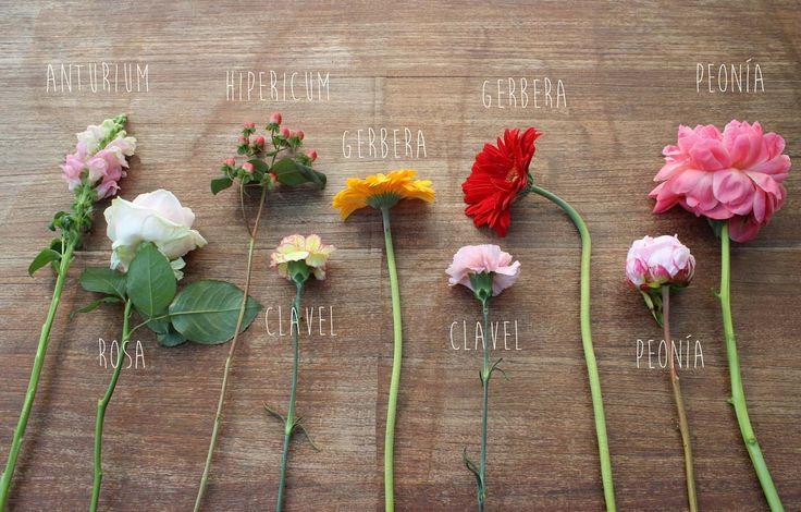 Mis flores en casa - Selección de flores 15 al 30 de junio