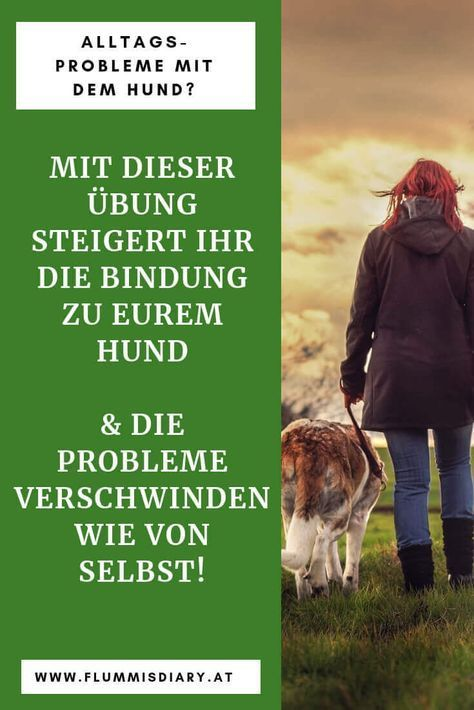 Aufbauen Build and train dog-binding – a guide that works guaranteed