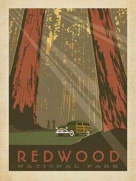 Art & Soul of America: Redwood National Park Gallery Print - midcentury - Fine Art Prints - Anderson Design Group