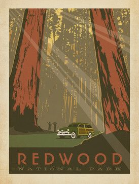 Art & Soul of America: Redwood National Park Gallery Print - midcentury - Fine Art Prints - Anderson Design Group