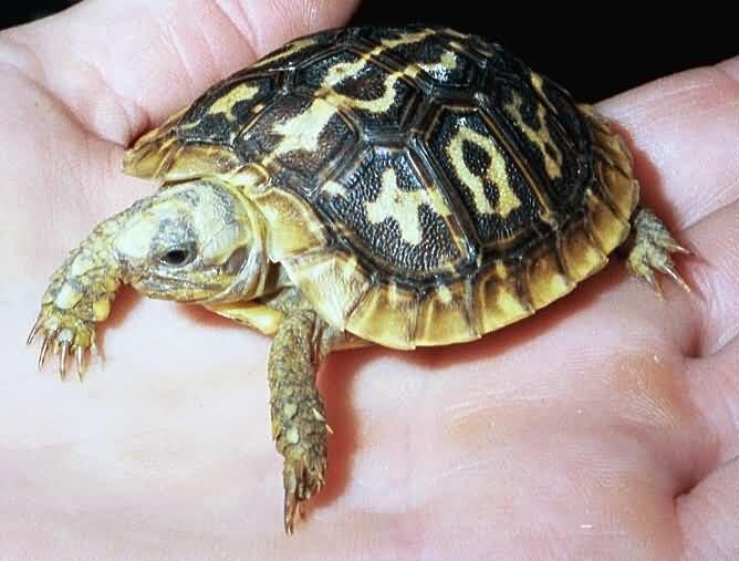 73 Best Images About Tortoise Plants On Pinterest