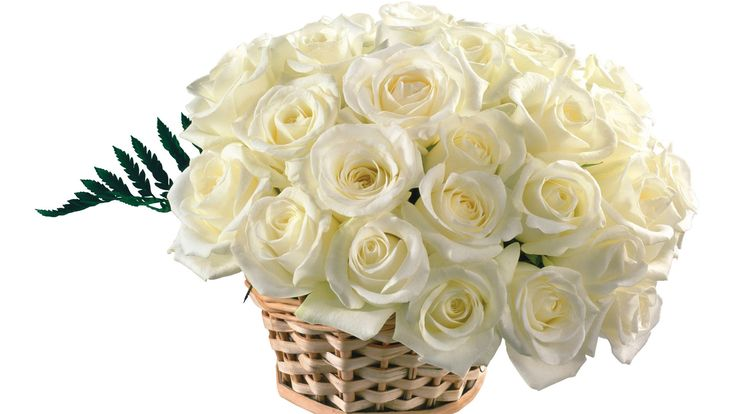 Top Wallpapers : White Rose Pictures Wallpaper, Top White Rose 1920×1080 White Rose Wallpaper (54 Wallpapers)   Adorable Wallpapers