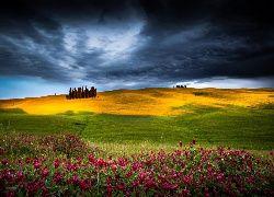 Pola, Kwiaty, Drzewa, Burzowe Chmury, Wzgórza
