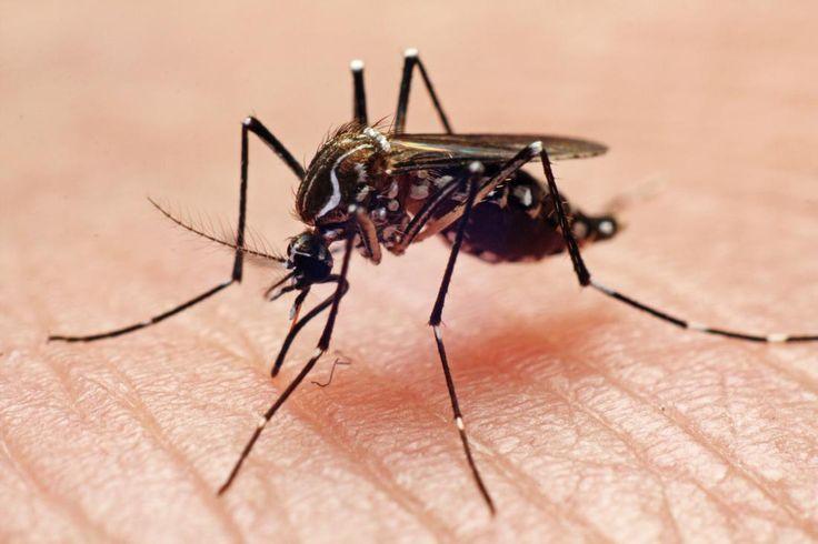 zika virus - Google zoeken: