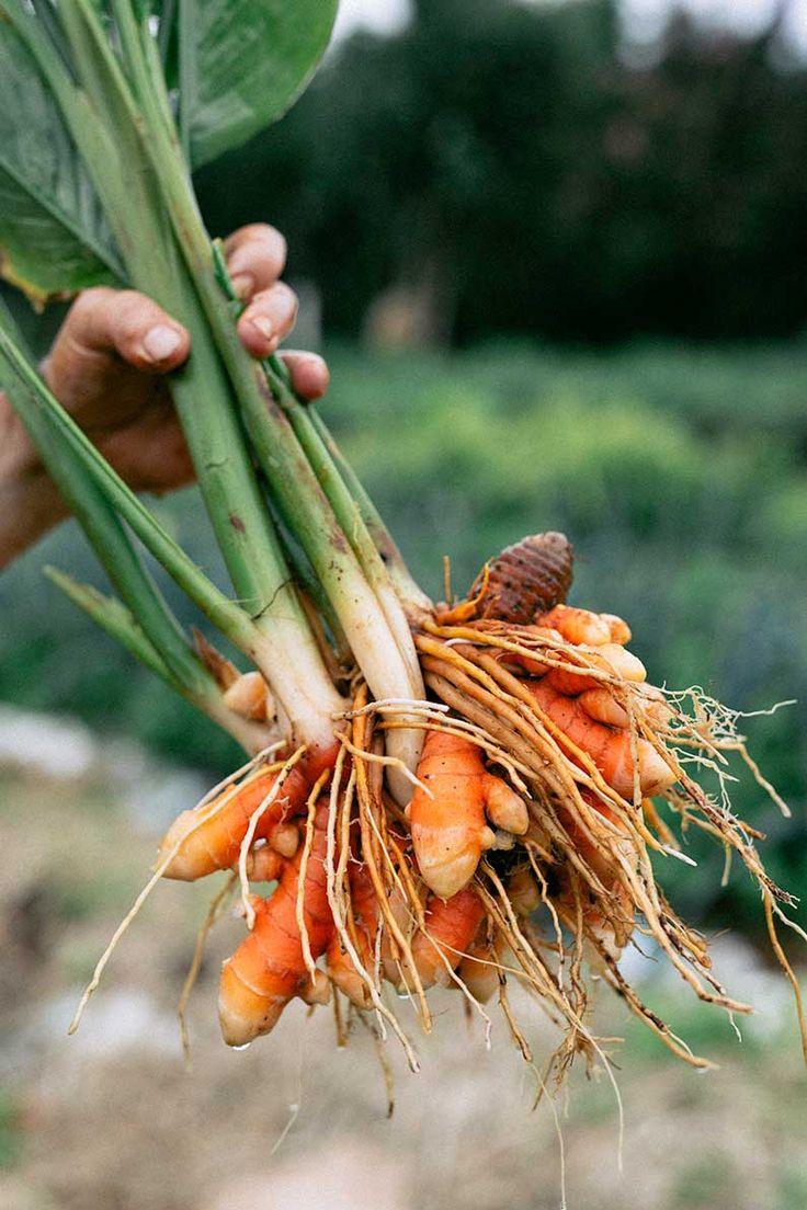 Just-harvested Turmeric | Toasted Brown Rice Flake Porridge | Real Food School | Photo: Christine Sharp