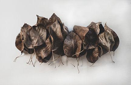 leaves - softblur photography