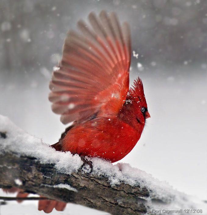 Making Snow Angels.
