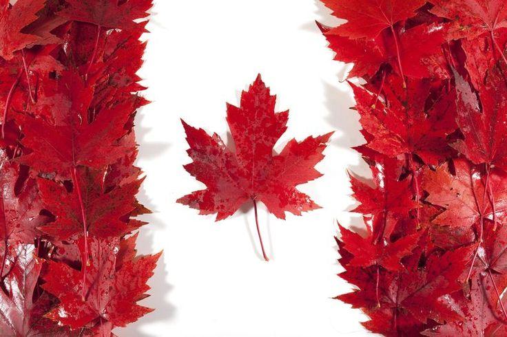 Bandera de Canadá representada con hojas de arce.
