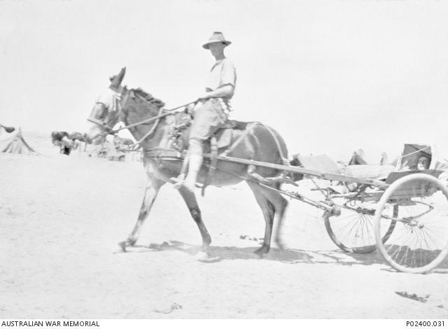 Ottoman Empire: Palestine, Beersheba, c 1917. A soldier, possibly a member of the 5th   Light Horse Brigade, sits astride a mule as it pulls an ambulance cycle cart which   contains another man in the semi-covered litter. Note the cart's large wheels which   proved to be too light for the hard usage required of them especially in the soft sand   of the desert.     Australian War Memorial, Canberra (Australia).