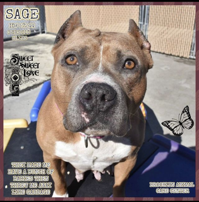 Sage Adopted 03 31 19 Needs Help With Images Nyc Dogs