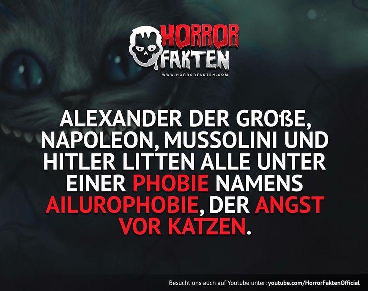 ❝Miau heil❞  #horror #fakten #horrorfakten