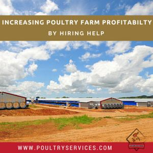 Increasing Poultry Farm Profitability by Hiring Help - http://www.poultryservices.com/blog/increasing-poultry-farm-profitability-by-hiring-help