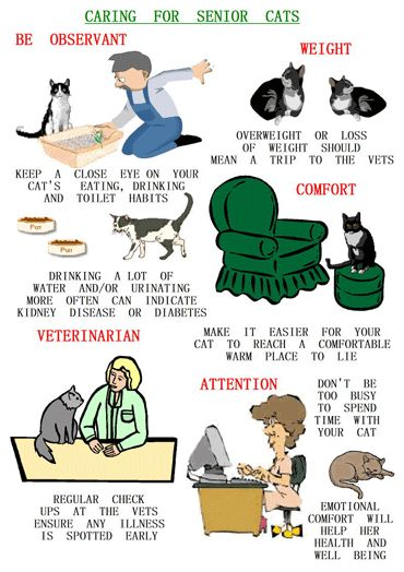 If you're loved by an older feline friend, here are tips for providing him or her with the best care!
