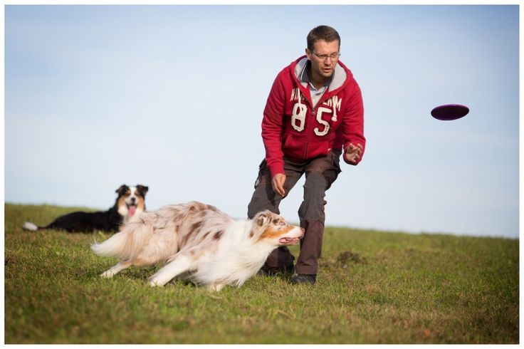 Richtig spielen mit dem Hund - Hundetrainer Dresden
