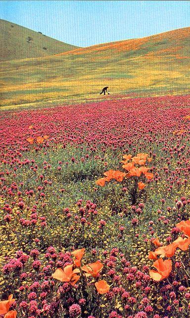 a field of flowers:)