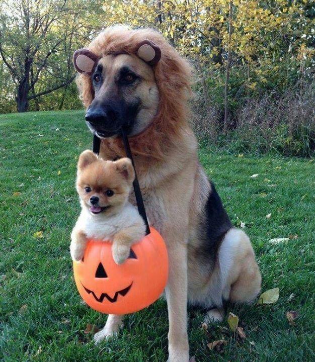 Trick or treat...dog bones please!!!!