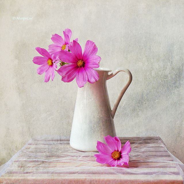 Still Life & Pink Flowers by MargoLuc, via Flickr
