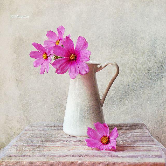 Still Life & Pink Flowers by MargoLuc, via Flickr