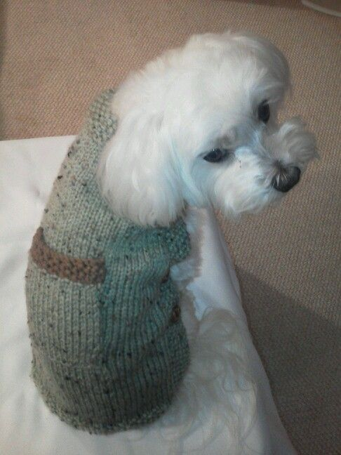 Dog Sweater Knitting Pattern For Maltese : 17 Best images about dog knits on Pinterest Dog coat pattern, Dog coats and...