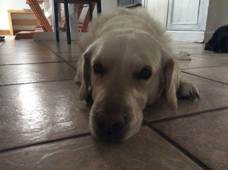 Lazy dog Molly