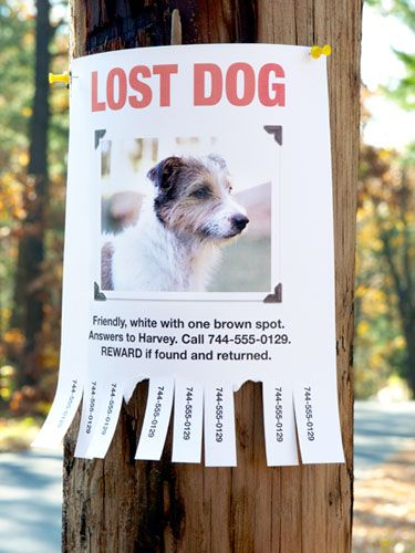 The 25+ best Lost pets ideas on Pinterest How to find someone - lost pet poster