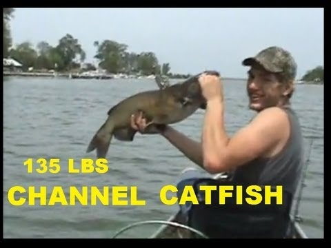 135 LBs of CHANNEL CATFISH - http://www.thehowto.info/135-lbs-of-channel-catfish/