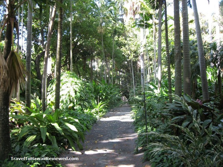 19 best images about hawaii on pinterest gardens swim and north shore for Foster botanical garden honolulu