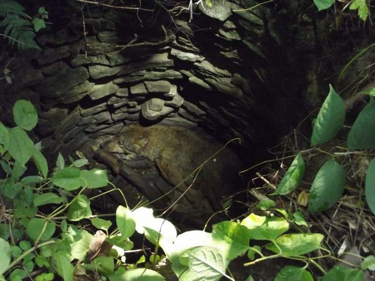 W lasach w okolicach Arłamowa (Nadleśnictwo Bircza) na Pogórzu Przemyskim, leśnicy pomagają kilkuletniemu wilkowi, który wpadł do wyschniętej, głębokiej na kilka metrów studni, będącej pozostałością po istniejącej tu niegdyś wsi.