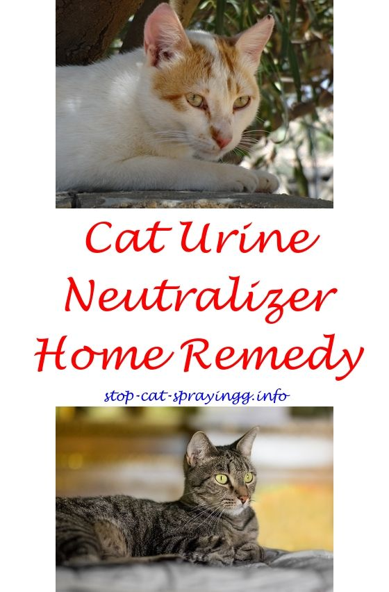 Cat Deter Spray For Furniture Scratch Pinterest Cats And Male Spraying