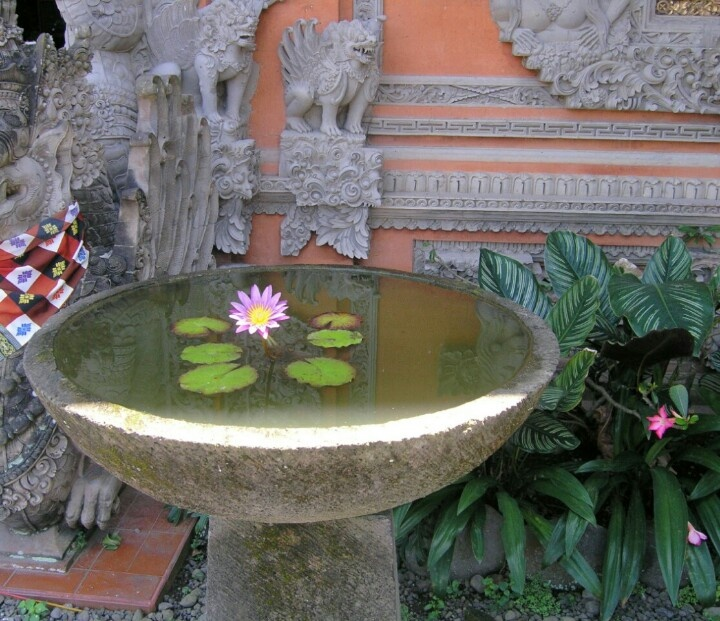 31 best images about lotus ponds on pinterest gardens for Garden designs sri lanka