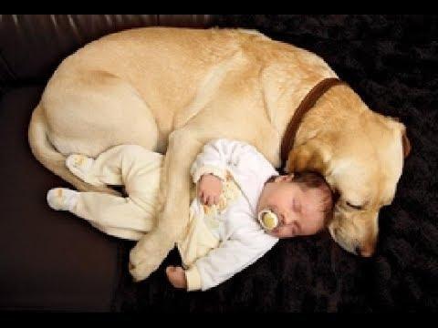 Hermosísimos animales protegiendo a los más pequeños de la familia, ¡puro amor!