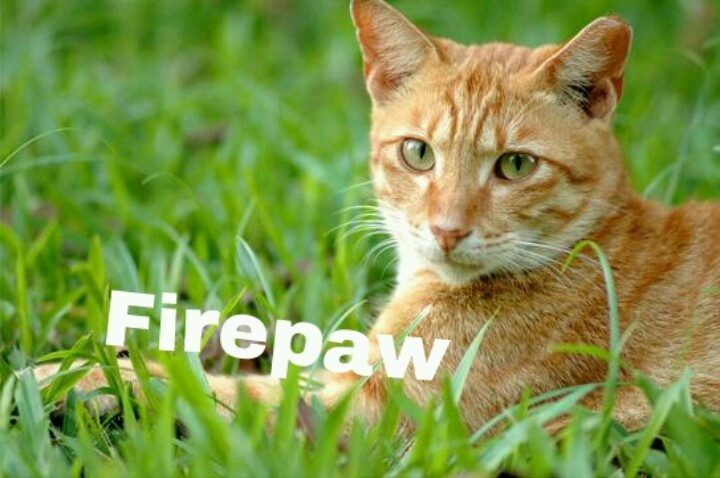 Ginger tom with flame colored pelt Warrior cat names