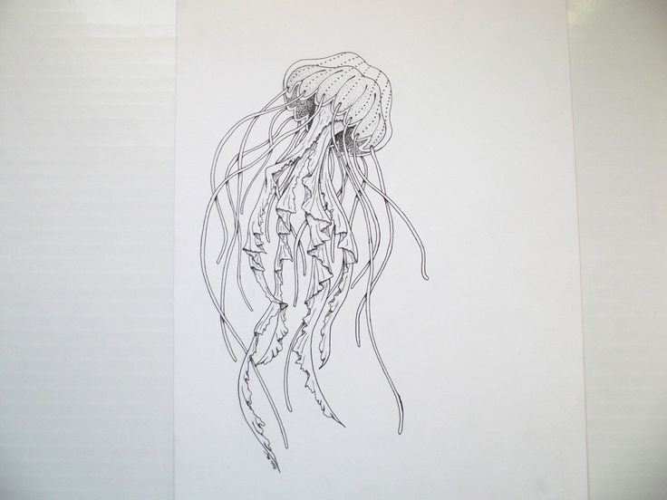 Line Drawing Jellyfish : Best elephant drawings images elephants
