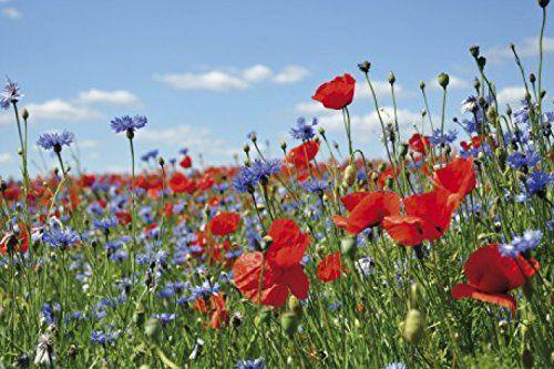 1art1 55244 Blumen - Wildblumen-Wiese Mit Mohn- Und Kornb…