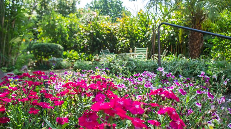 Neat and tidy colourful garden with lots of space to relax.