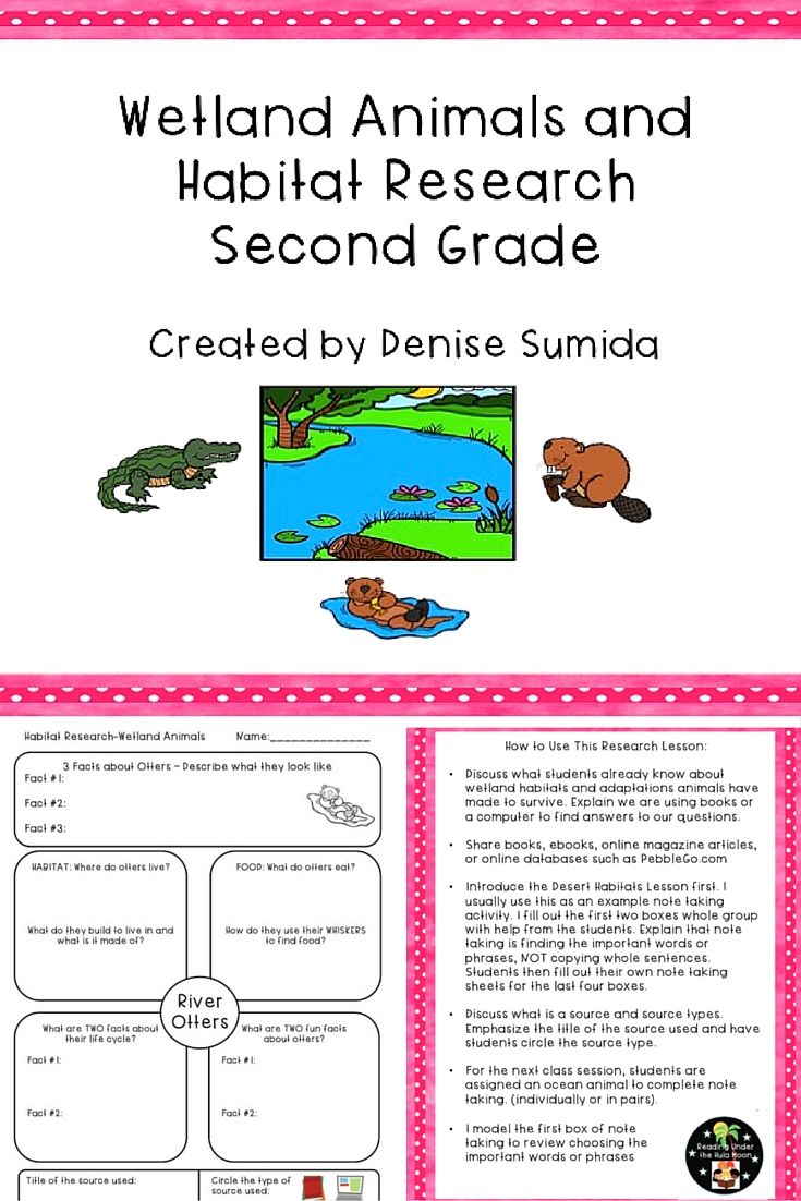 This is a great note taking lesson to teach about animals in wetland habitats. Research question boxes are: Basic Facts, Habitat, Food, Life Cycle, and Fun Facts. Includes Alligators, Beavers, Frogs, Crayfish, Dragonflies, Ducks, Garter Snakes, Mosquitoes, Muskrats, River Otters, Turtles, Trout, and a blank note taking page