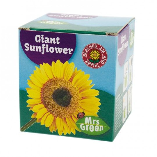 Grow a sunflower kit - $10 National geographic store