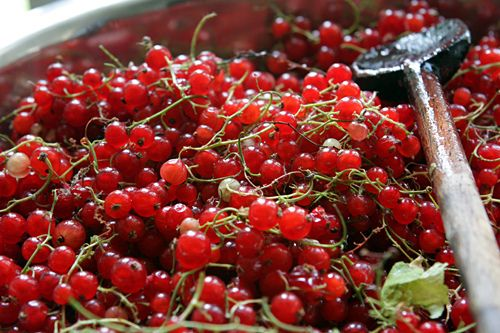I love red currants, these are from www.davidlebovitz.com so pretty!