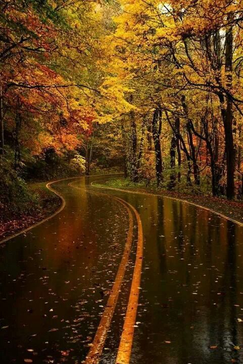 can't you just smell the air in this picture? ~sigh~  and hear the tires splashing the wet pavement as you cruise down this road ... mmmm (I love autumn)