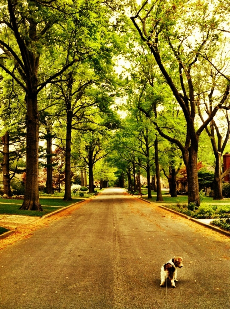 ive always wanted to live on a street like this with the big trees lined up (and a cute puppy too) :)