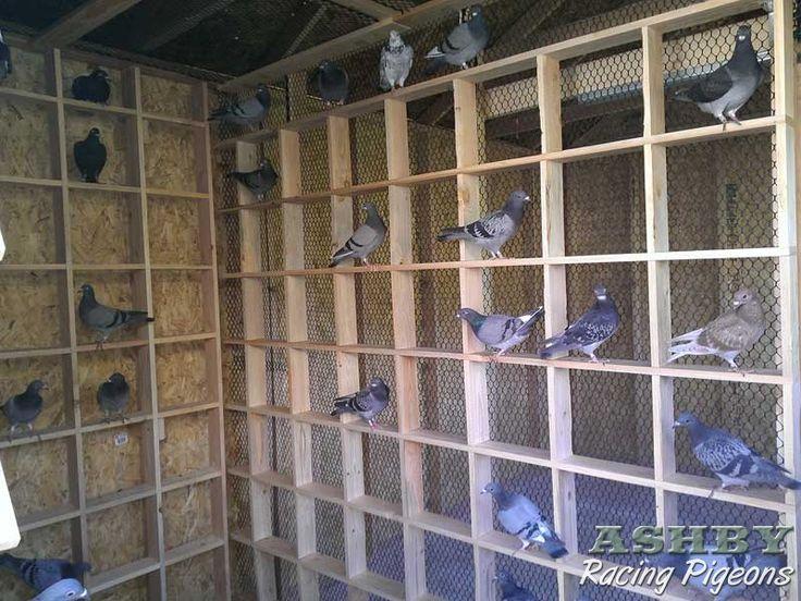 Racing Pigeon Photos | Pigeon Loft Construction |