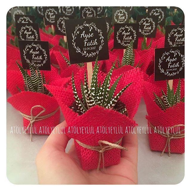 Kırmızı aşkına#sukulent #succulents #minisukulent #kaktus #cactus #succulove #nikahsekeri #babyshower #disbugdayi #birthdaygift #kurumsalhediye #weddingfavour #gift #favors #hediyelik #weddinggift #nişanhatırası #nişanhediyesi #sözhatırası #sözhediyesi #düğünhediyesi #düğünhatırası #kırdüğünü