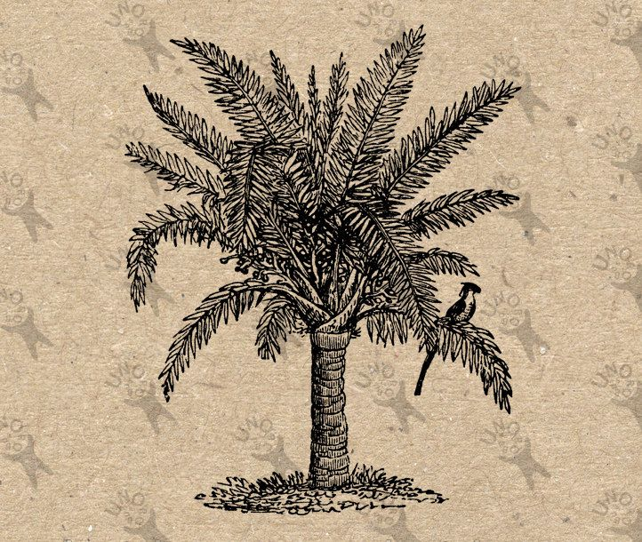 Vintage Palm Tree black and white image Instant Download Digital printable picture retro clipart graphic - transfer, burlap, iron on 300dpi by UnoPrint on Etsy