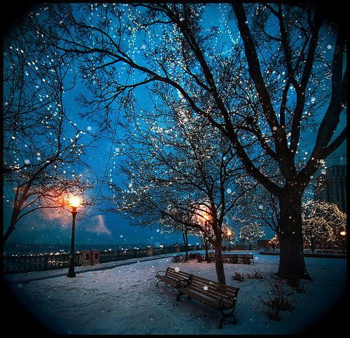 I need a view like this in my life.: Twinkle Lights, Silent Night, Blue Christmas, Parks Benches, Night Lights, Christmas Lights, Winter Wonderland, Places