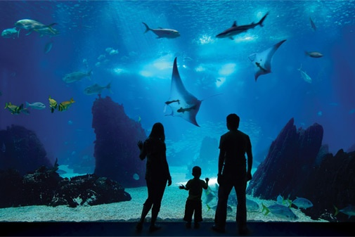 Marine Life Park- Dive into Marine Life Park, the world's largest oceanarium and be inspired by the myriad marine wonders of our blue planet. Explore the world's largest aquarium at S.E.A. Aquarium and plunge into wet and wild fun at Adventure Cove Waterpark. Come discover an action-packed aquatic world and fall in love with the spectacular ocean animals at Marine Life Park, Resorts World Sentosa Singapore!  http://www.rwsentosa.com/language/en-US/Attractions/MarineLifePark