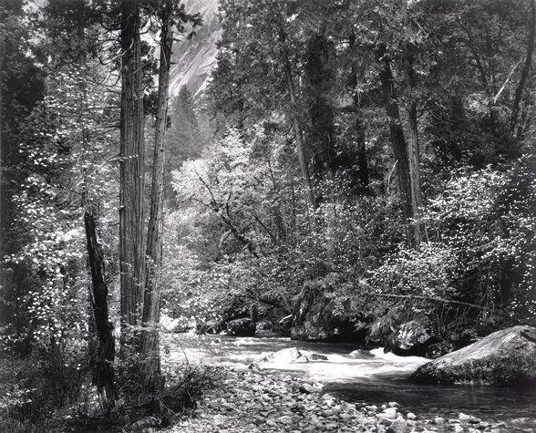 "Ansel Adams, ""Tanaya Creek, Dogwood Rain"" (1948)   photograph   gelatin silver print Source: http://www.sfmoma.org/explore/collection/artwork/103075#ixzz1jC3aq22h San Francisco Museum of Modern Art"